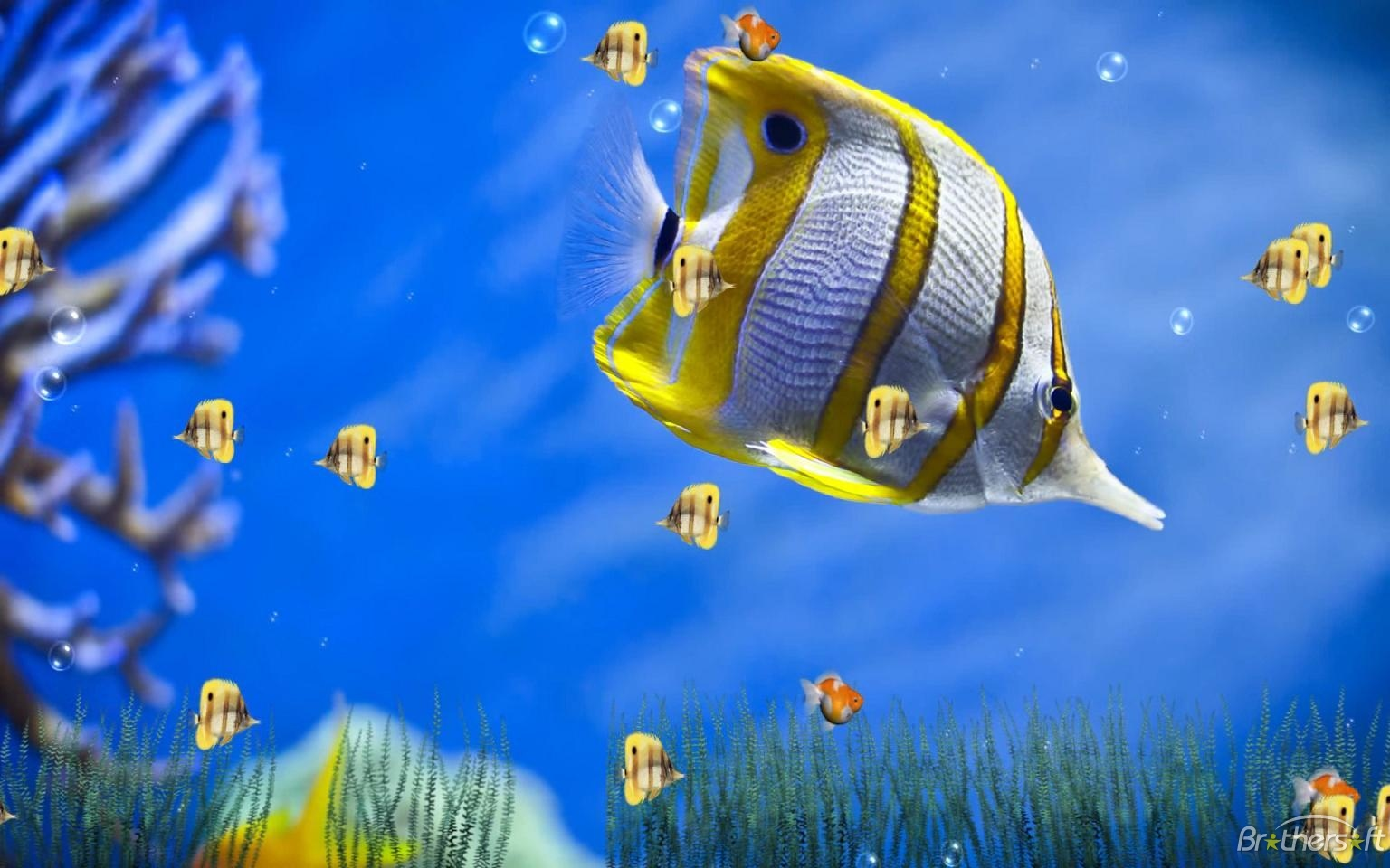 Marine Life Aquarium Animated Wallpaper Marine Life Aquarium 1536x960