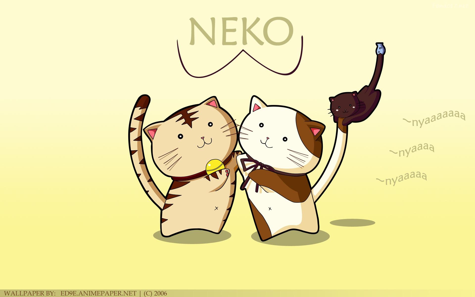 Nekos gatos para los no enterados 1920x1200