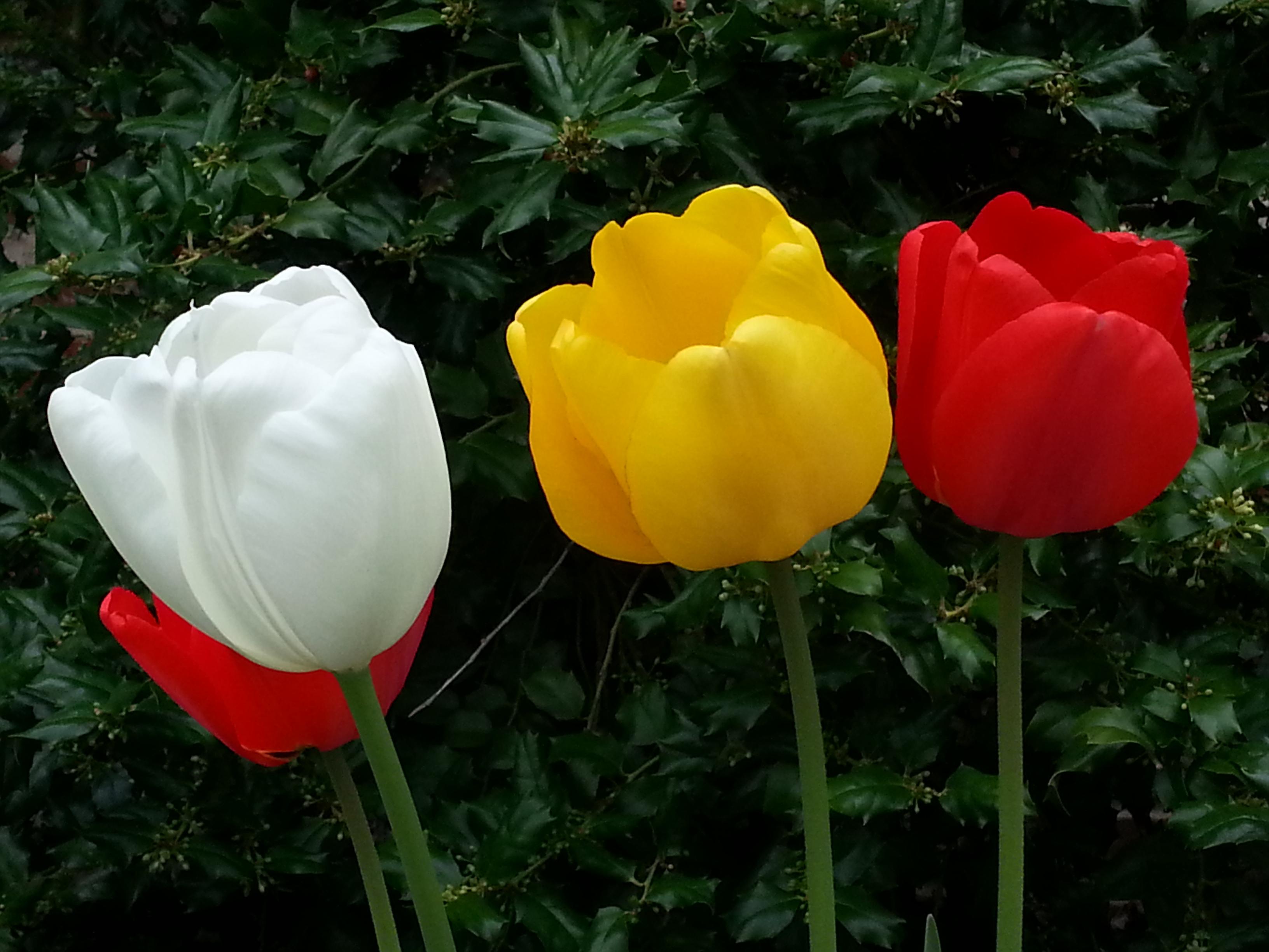 Very Nice Flowers Part Of Getting Is