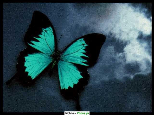 Green Butterflies Wallpaper Green black butterfly 640x480