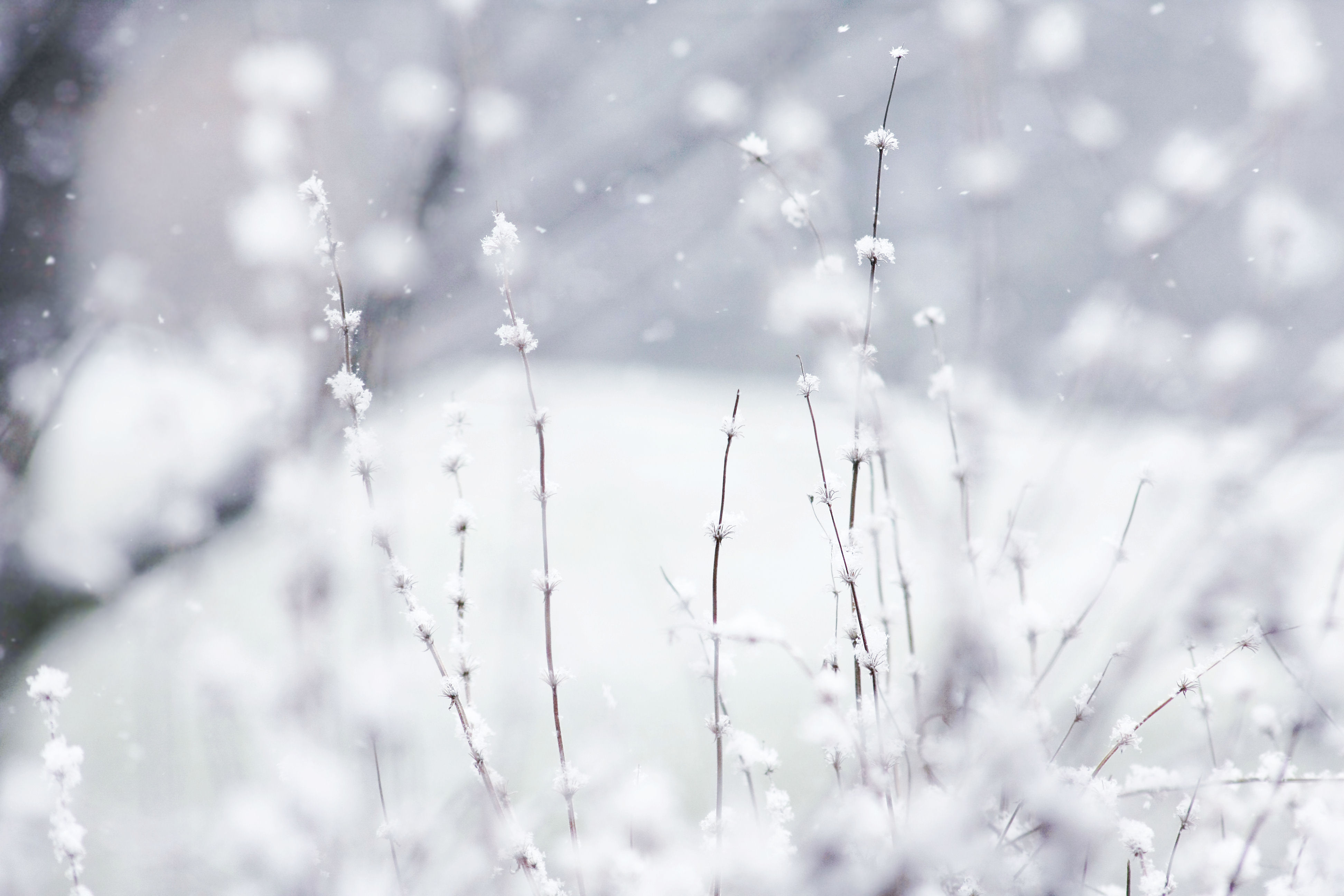 Winter Wallpaper 6795137 3888x2592