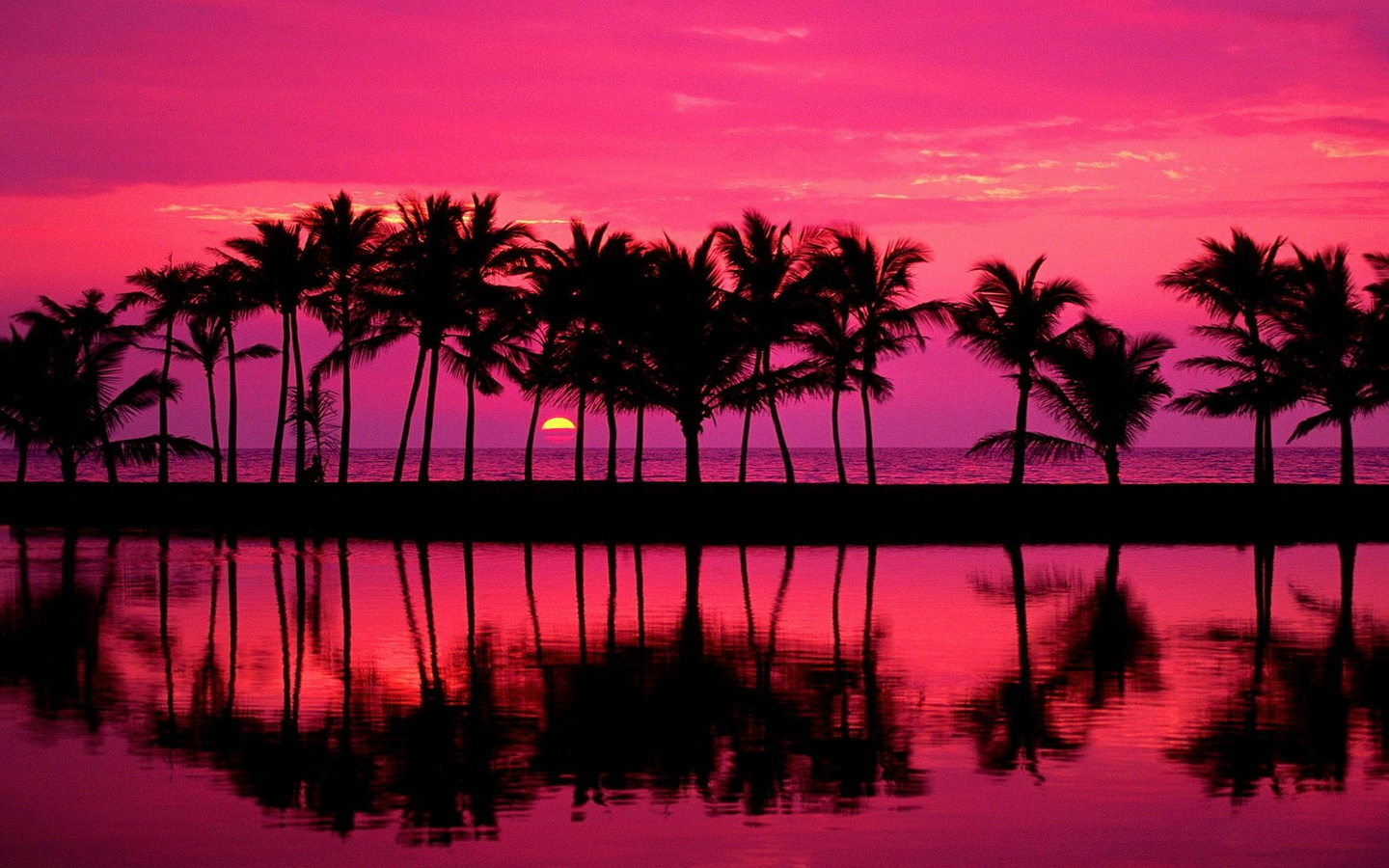 Beach Sunset Backgrounds Tumblr: California Palm Trees Wallpaper