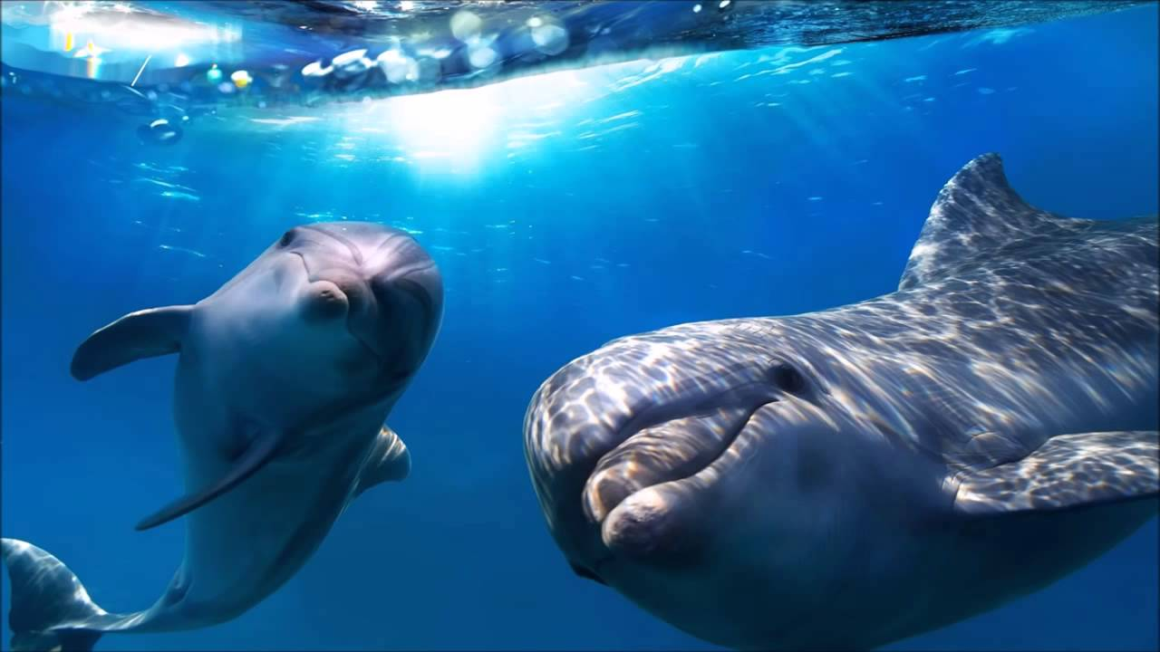 The Best Relaxing Music Ever Ocean Piano Dolphins 1280x720