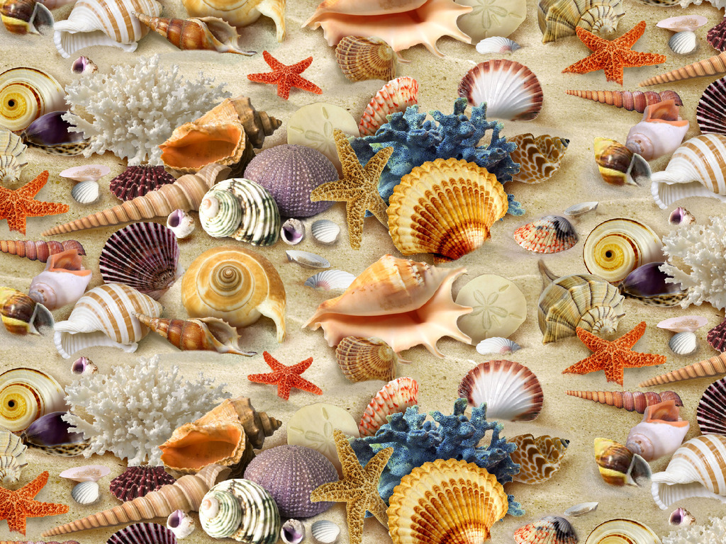 Shell Wallpapers and Background Images   stmednet 1024x768