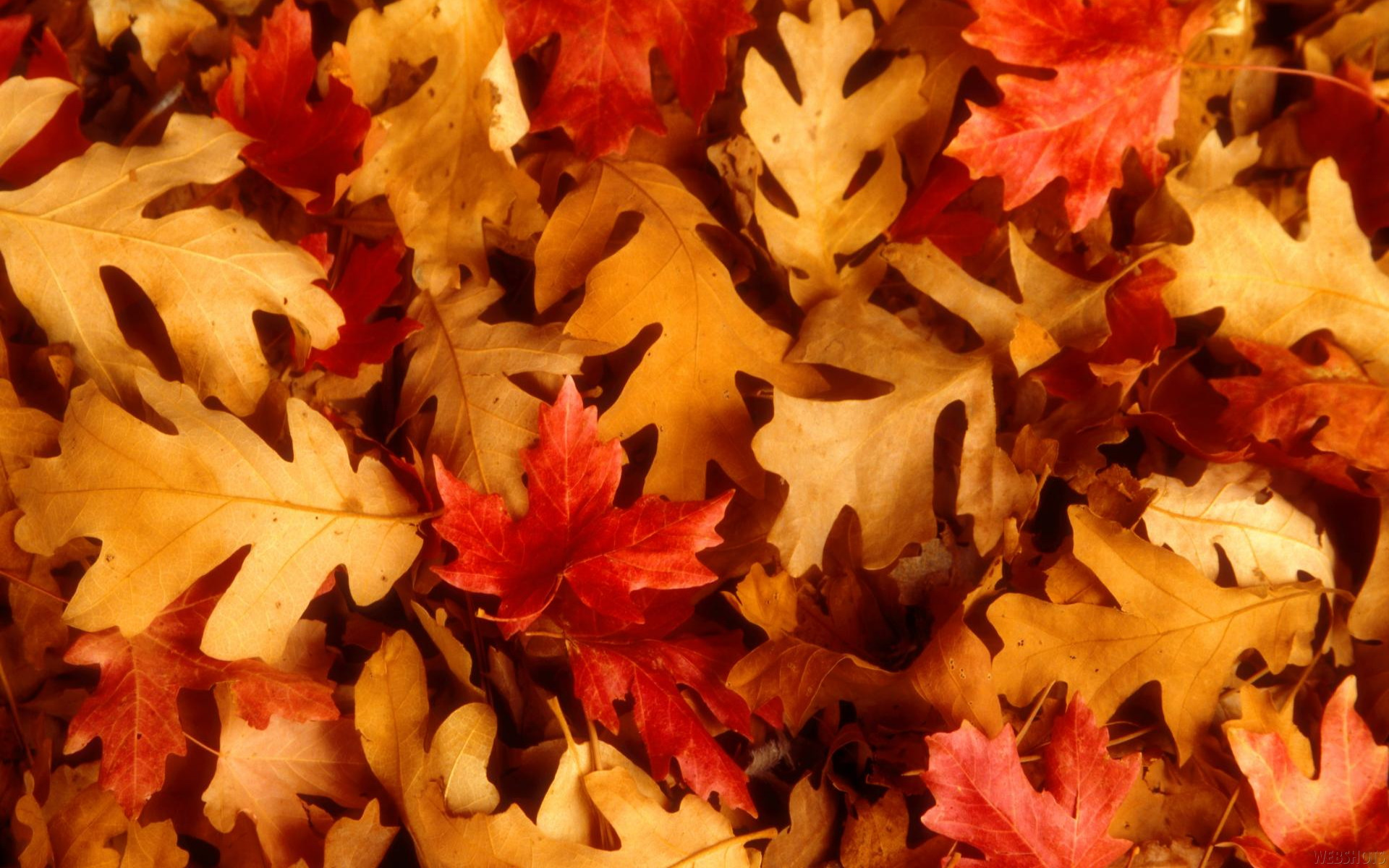 Autumn Leaves Wallpaper 1920x1200 Autumn Leaves Fallen Leaves 1920x1200