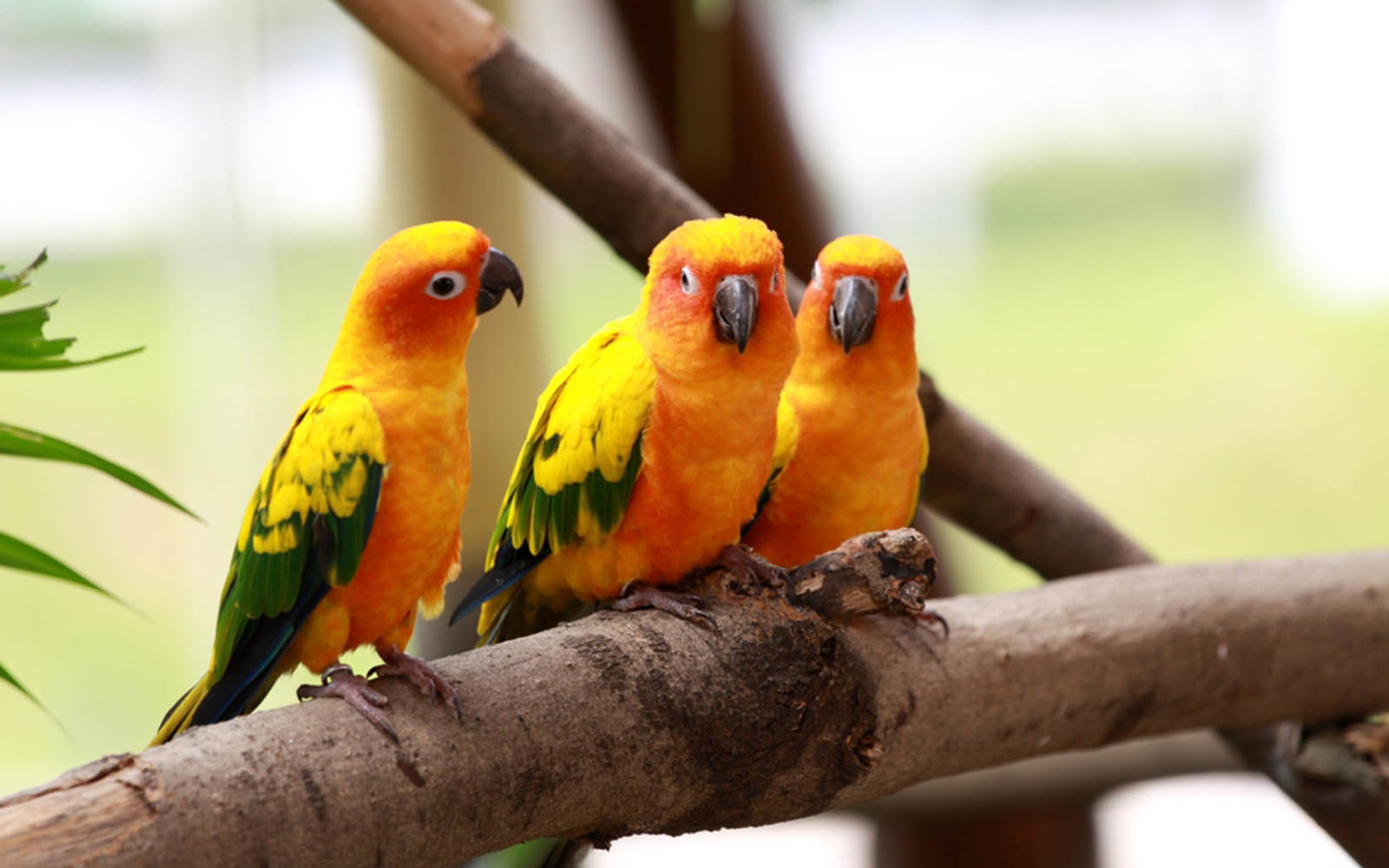 love birds wallpaper - wallpapersafari