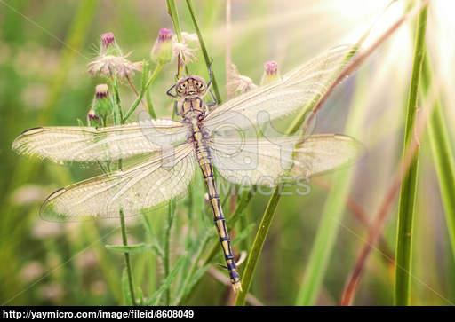 dragonfly screensaver 512x363
