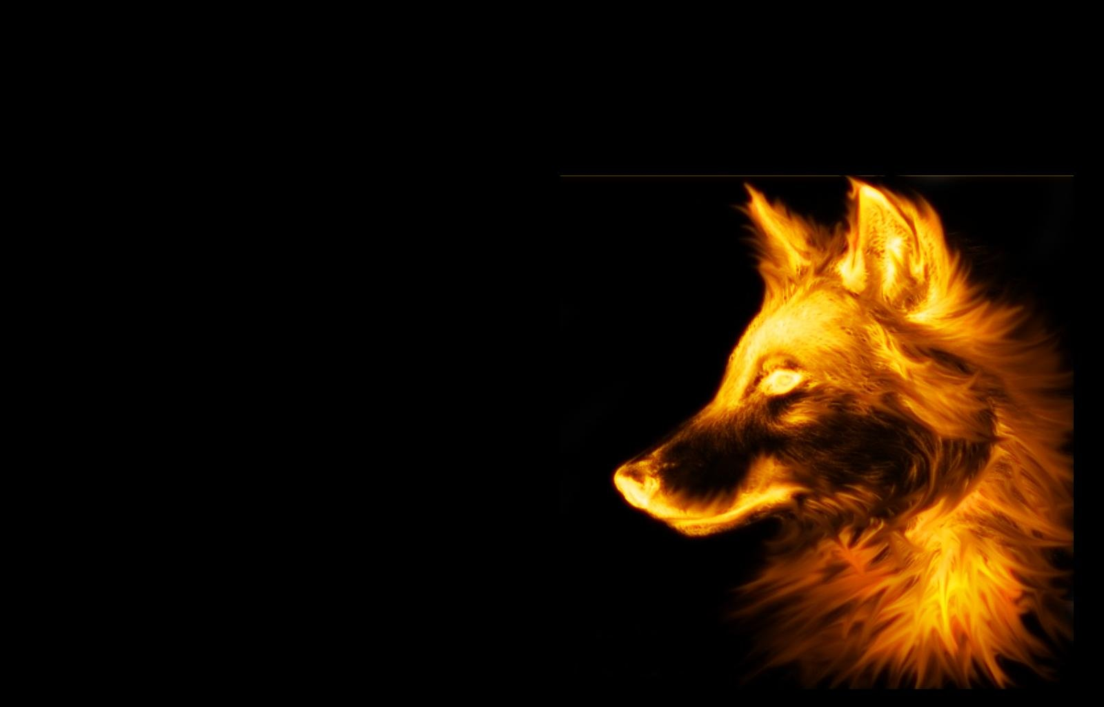 Fire Wolf Wallpaper 1600x1024 Fire, Wolf, Black, Background