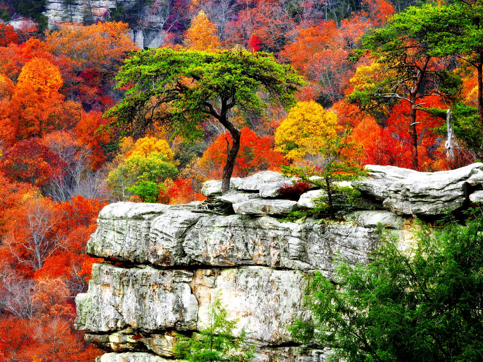 64 Free Wallpaper Backgrounds Download On Wallpapersafari