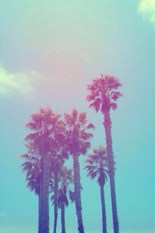 palm trees iphone wallpapers 500x750