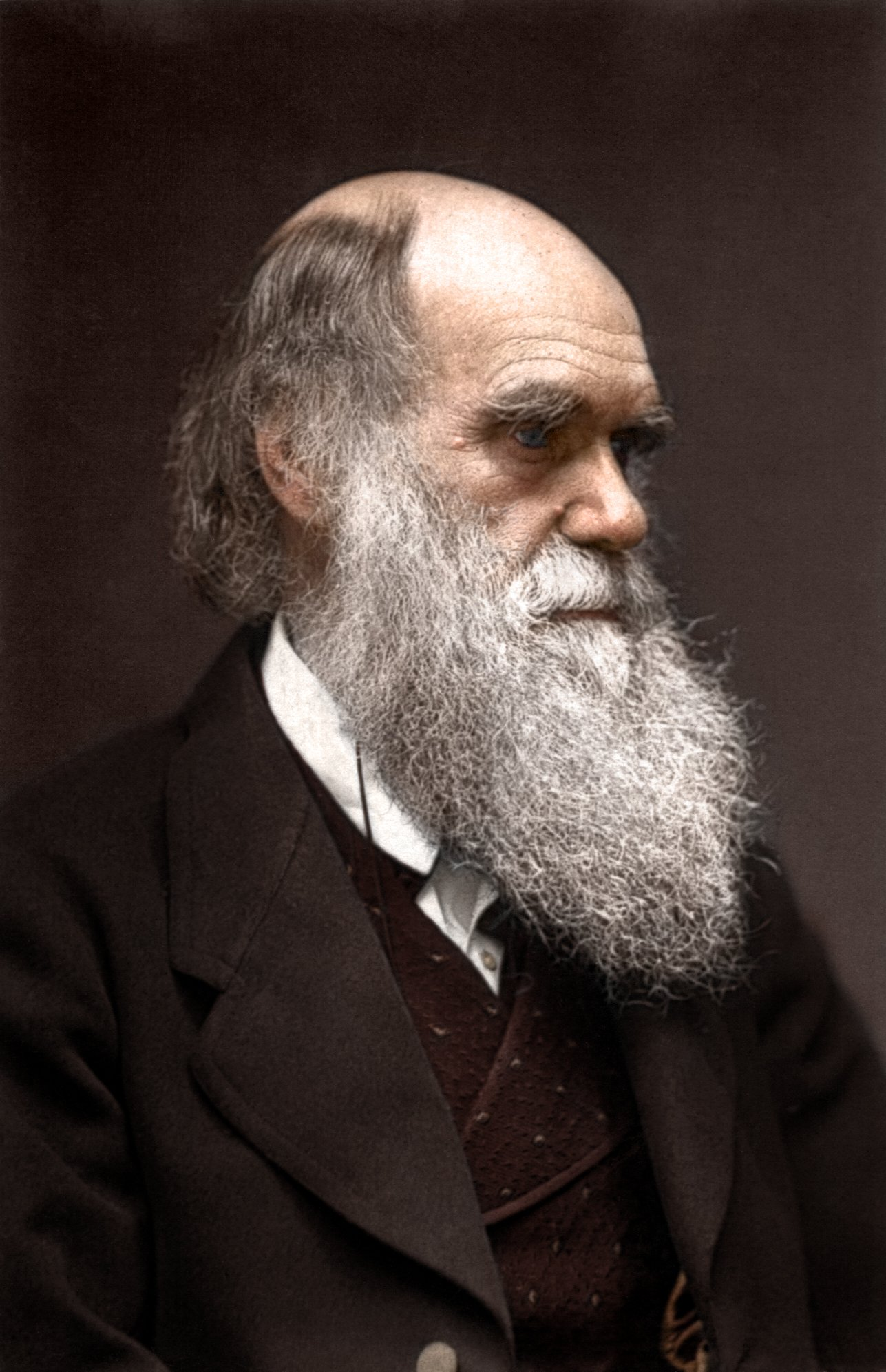 Wallpapers Of The Day Charles Darwin 1287x1993 Charles Darwin 1287x1993