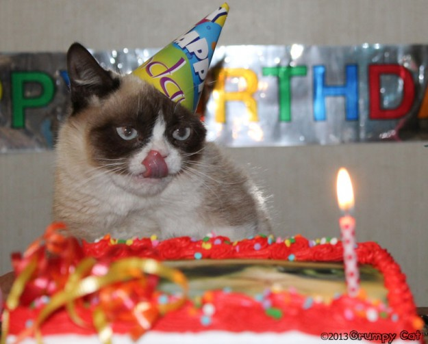 Funny Birthday Cat 27 Desktop Wallpaper 625x503