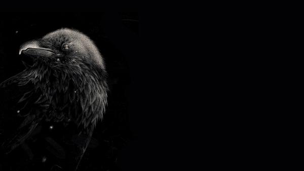 crow wallpaper iphone 6