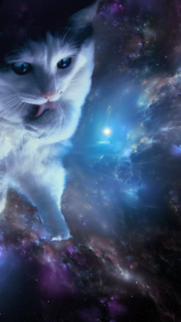 Space cat wallpaper iphone wallpapersafari - Space kitty wallpaper ...