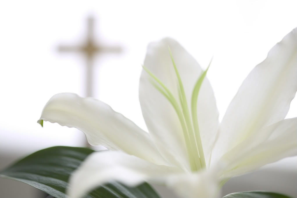 lily wallpaper on screen to spread cheer of easter and religious 1022x681