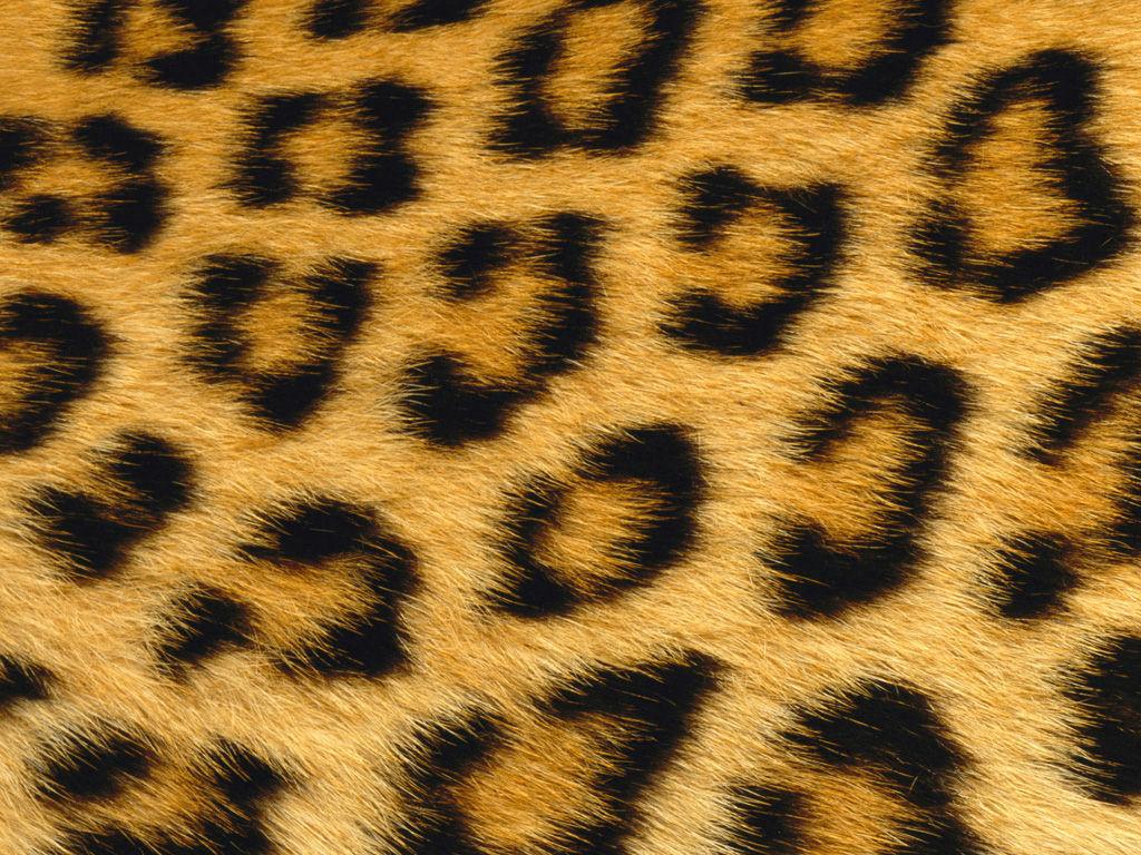 Faux Fur 1024x768
