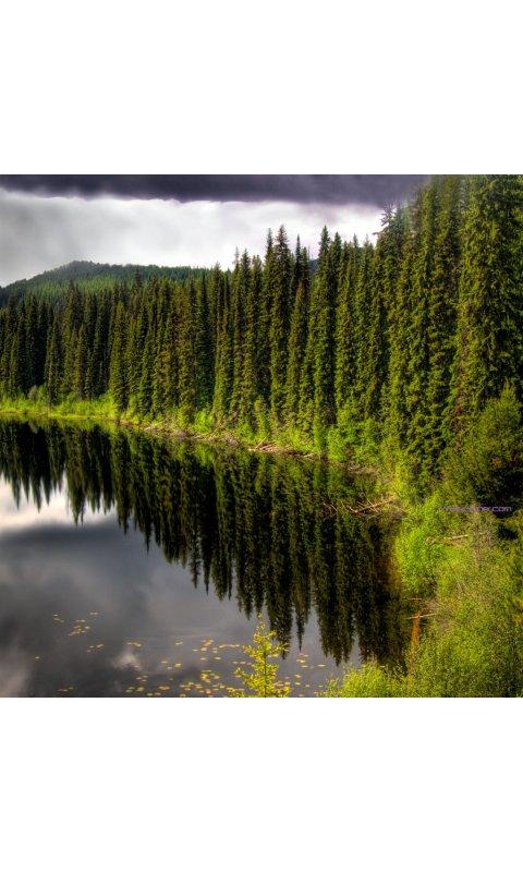 Beauty ecstaticist pine forest ipad wallpaper Wallpapers 480x800 2014 480x800