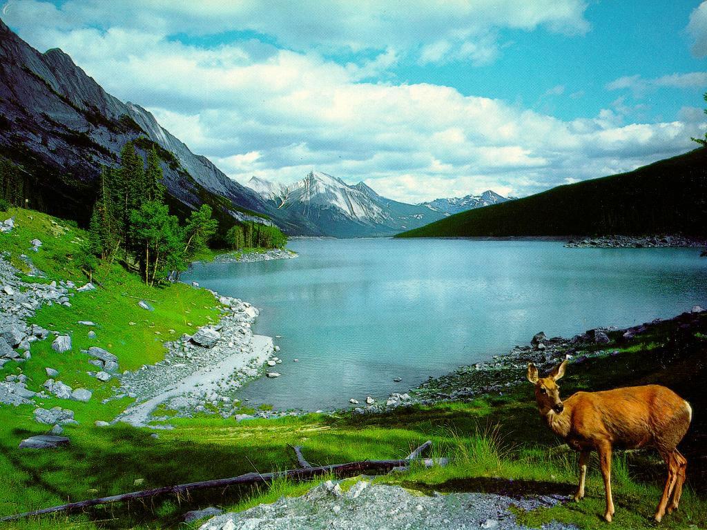 Reality Wallpapers beautiful nature wallpaper for desktop 1024x768