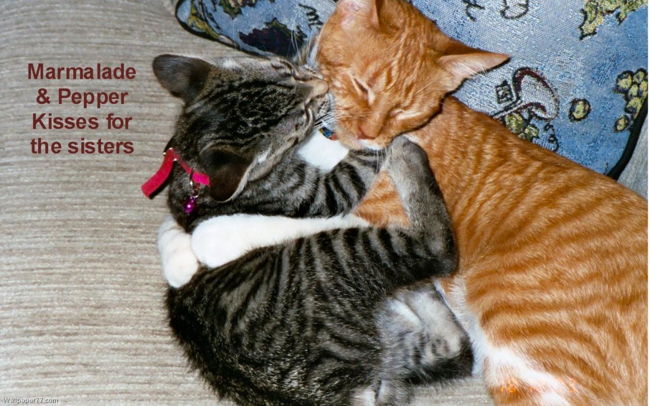 Kitten Love heart wallpapers love wallpapers valentine wallpapers 1280x800