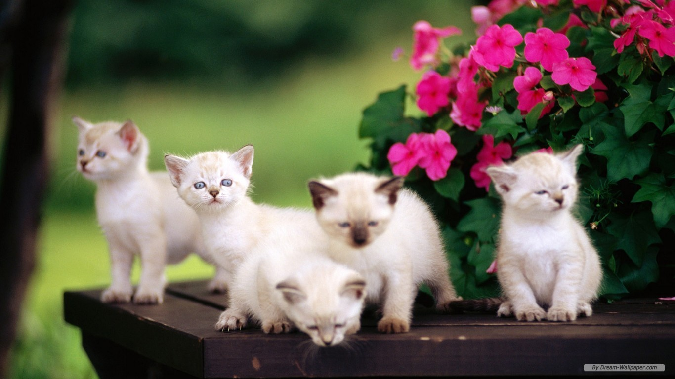 HD Animal Wallpapers Animals Wallpapers 1366x768