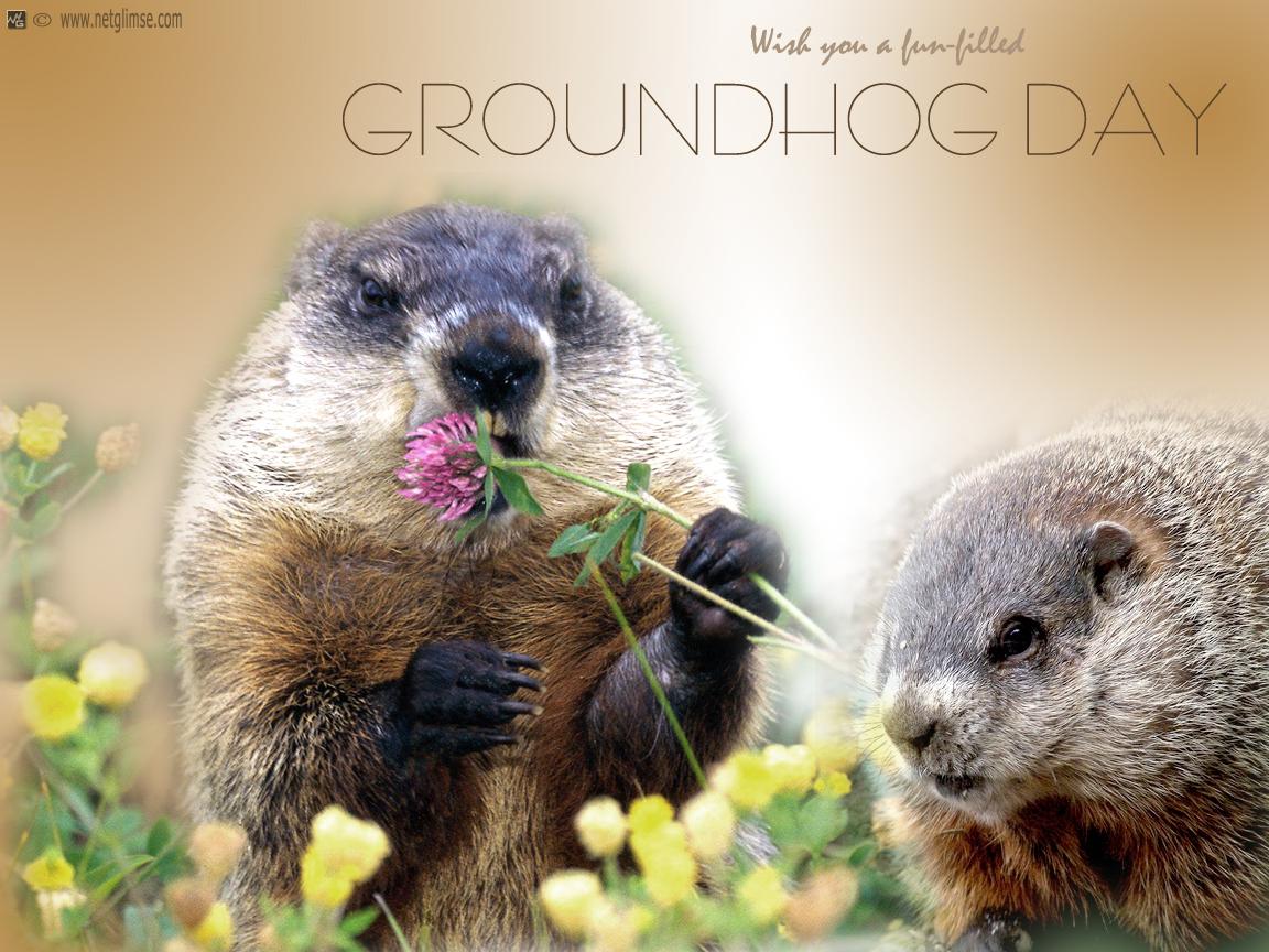76] Groundhog Wallpaper on WallpaperSafari 1152x864