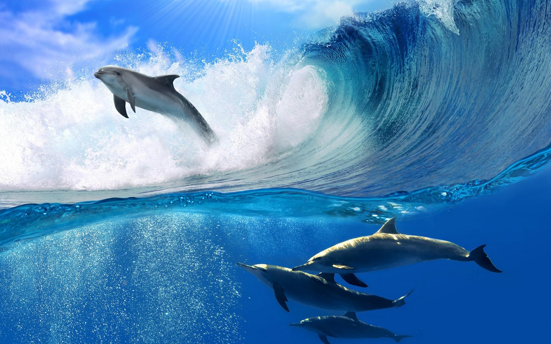 обои широкоформатные на рабочий стол бесплатно море и дельфины № 217033  скачать