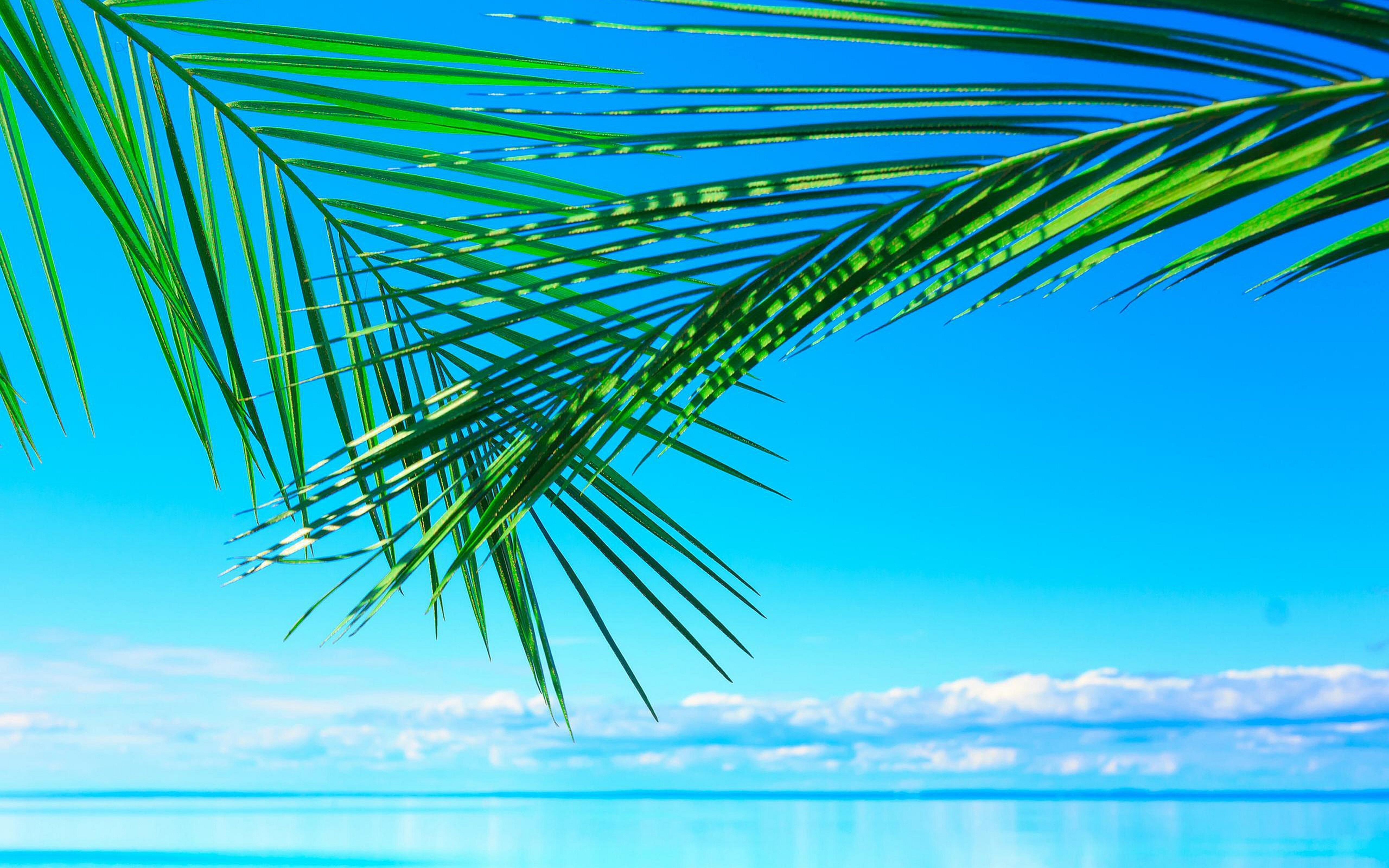 Green palm leaves over the blue water   HD summer wallpaper 5120x3200