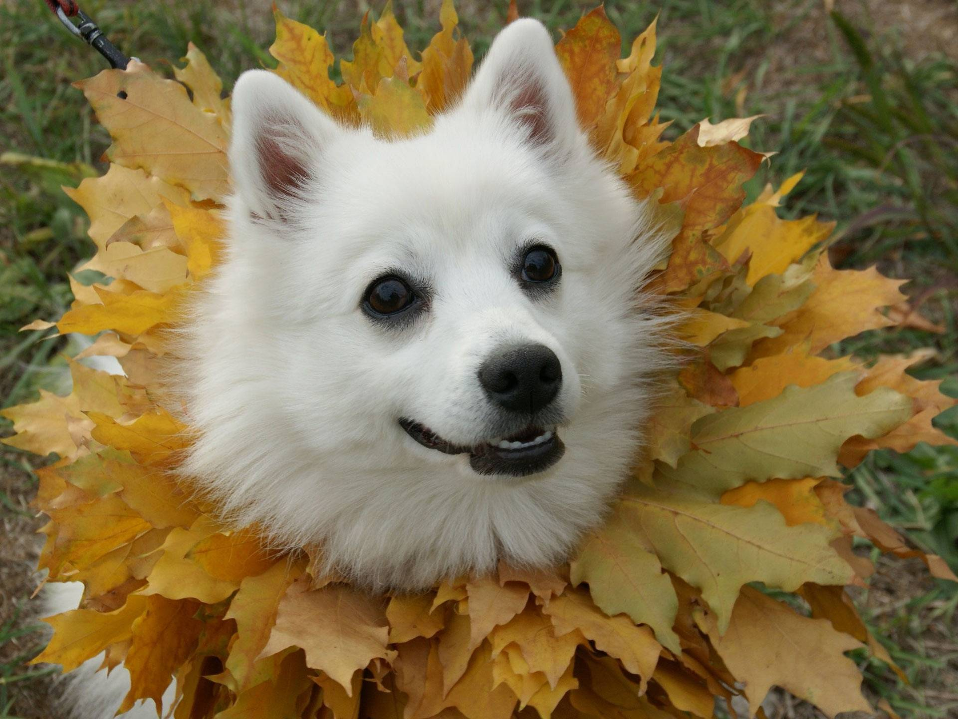 Leaves dog   Dogs Picture 1920x1440