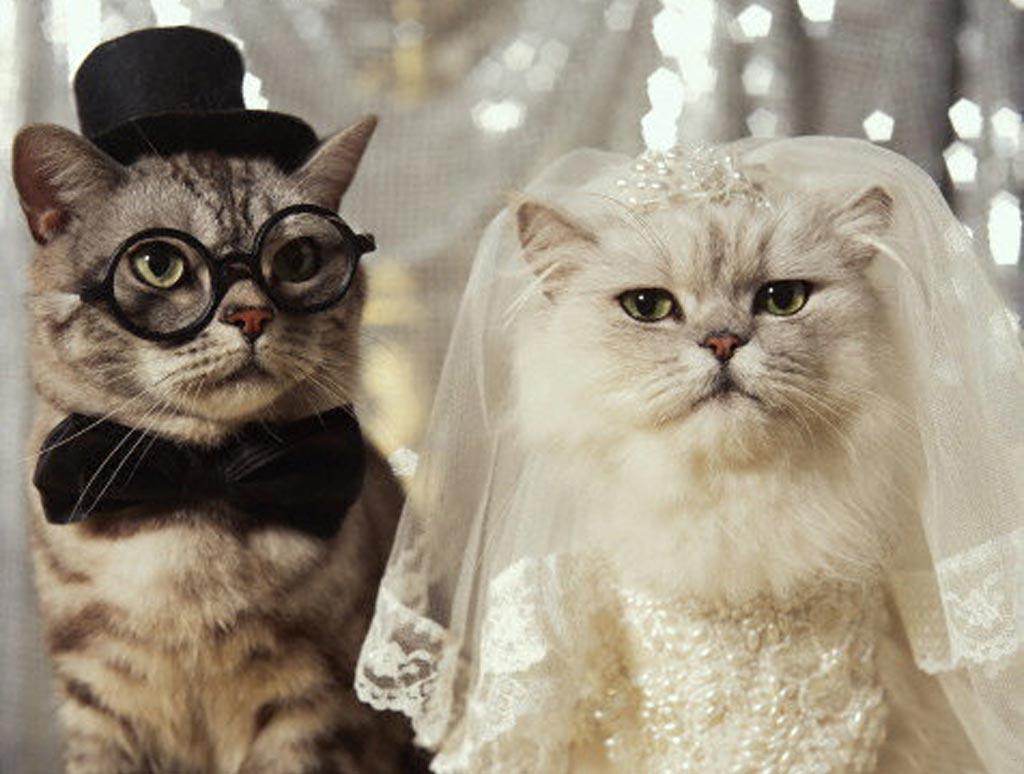 Very Funny Cat Photos 16 Desktop Wallpaper Wallpaper 1024x774