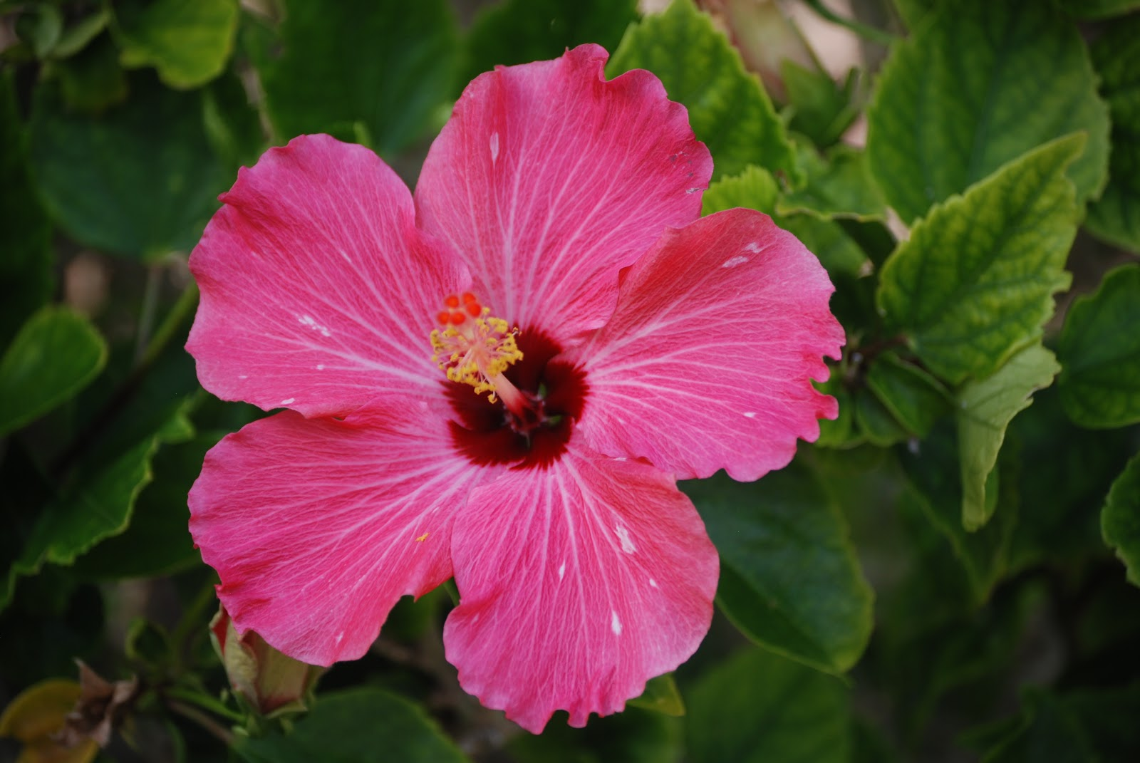 Unique Flowers Names Flowers Healthy