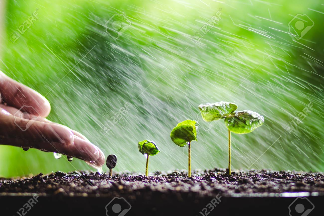 Growing Sapling Coffee Trees Hand Protect Nature Background Stock 1300x866