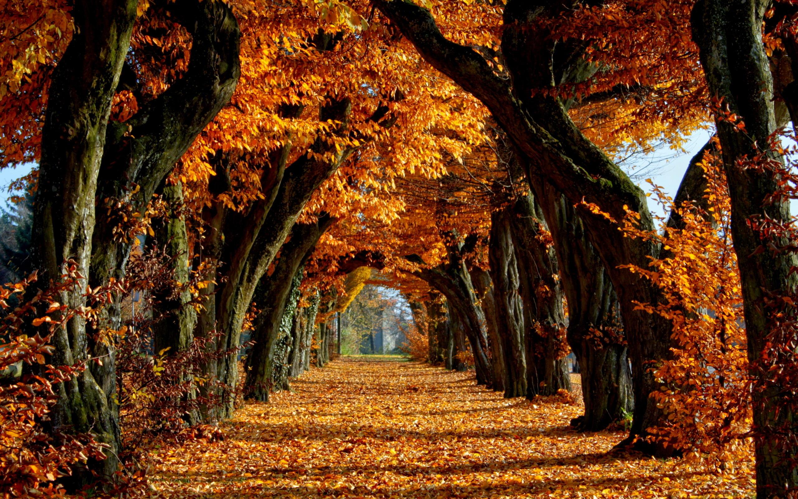 Golden autumn wallpaper background 16801050 widescreen hd wallpaper 2560x1600