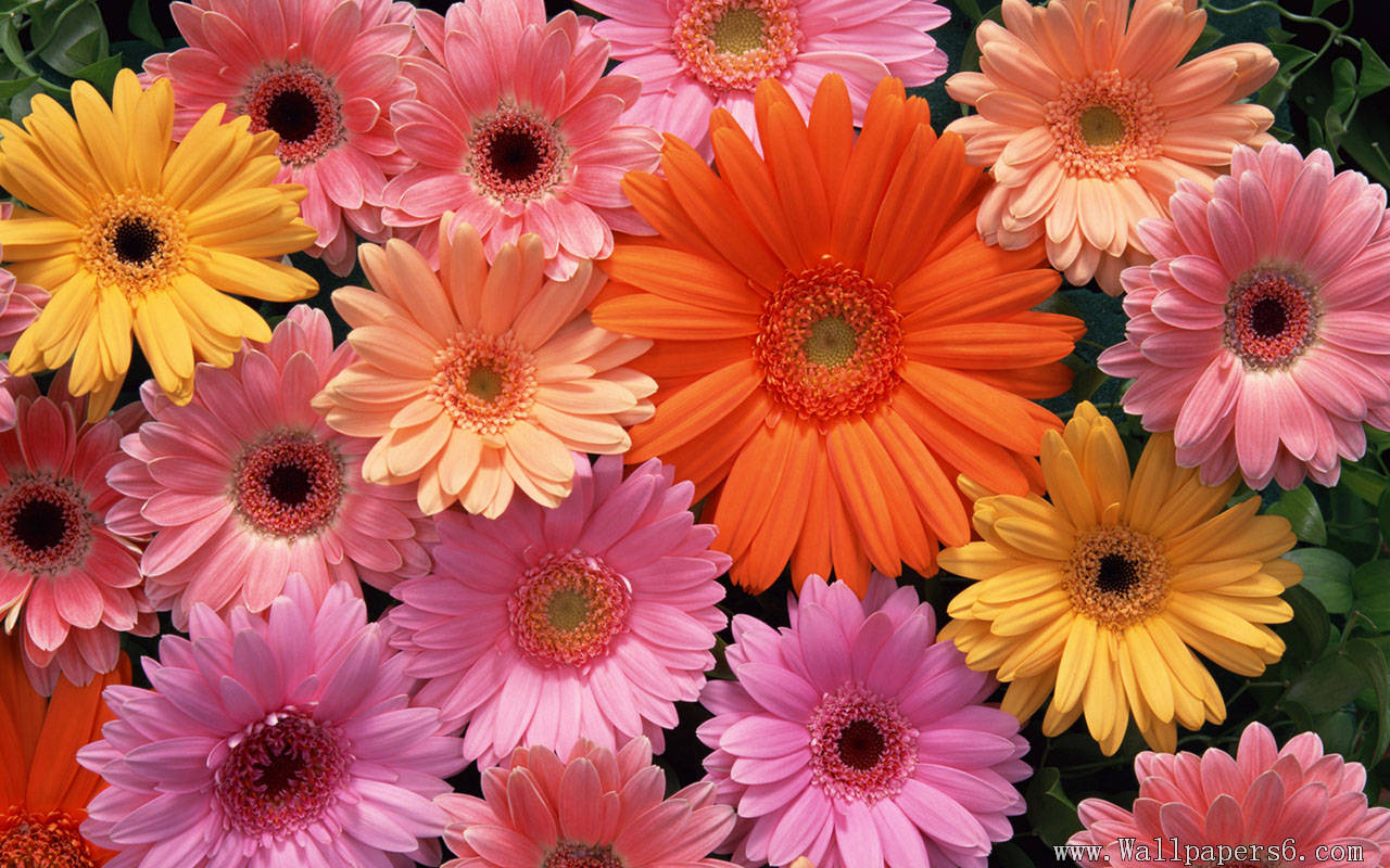flowers Combination Flower Wallpapers   download 1280x800