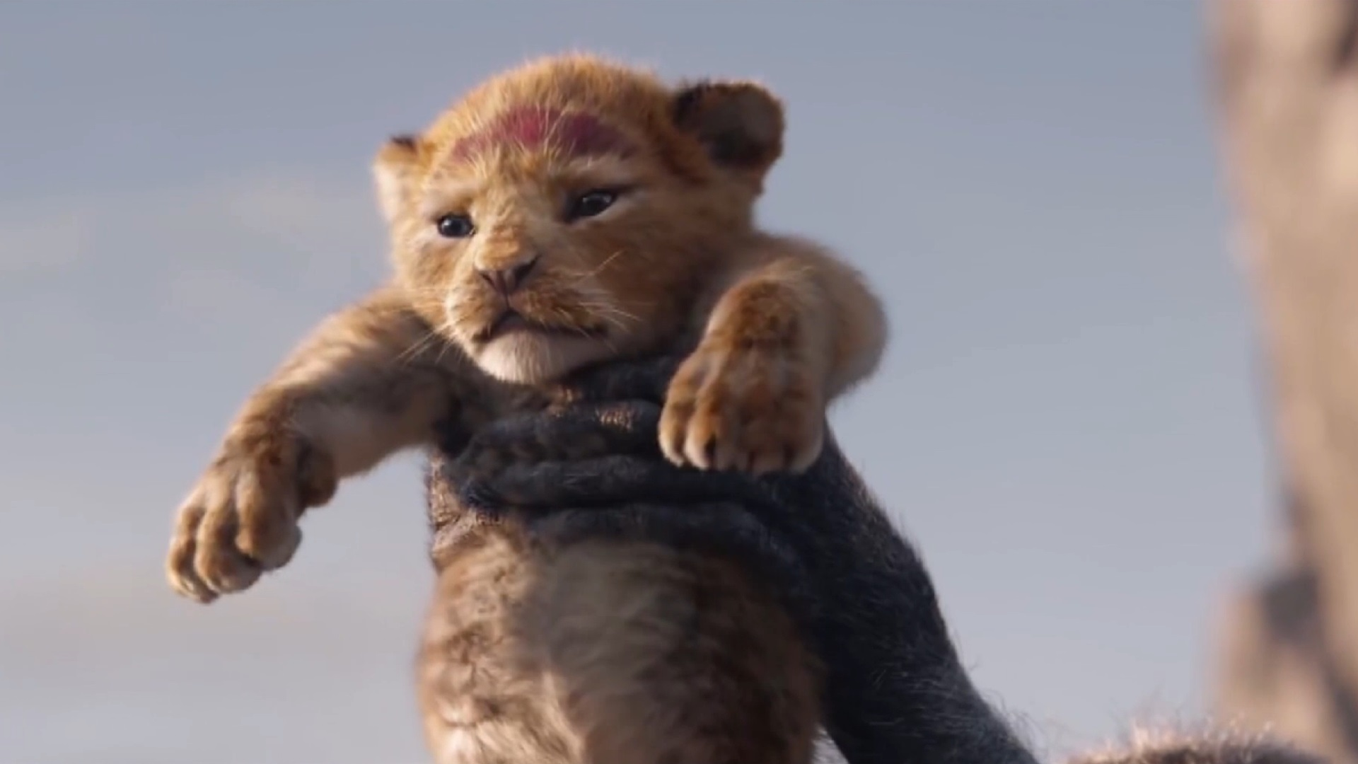 The Lion King 2019   The Lion King 2019 Wallpaper 42723127 1920x1080