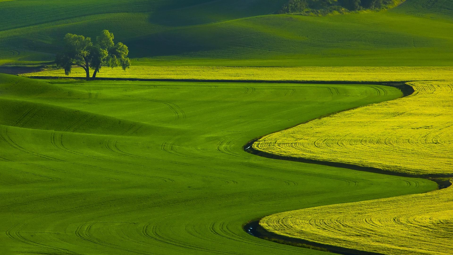природа поле трава зеленая  № 610521 без смс