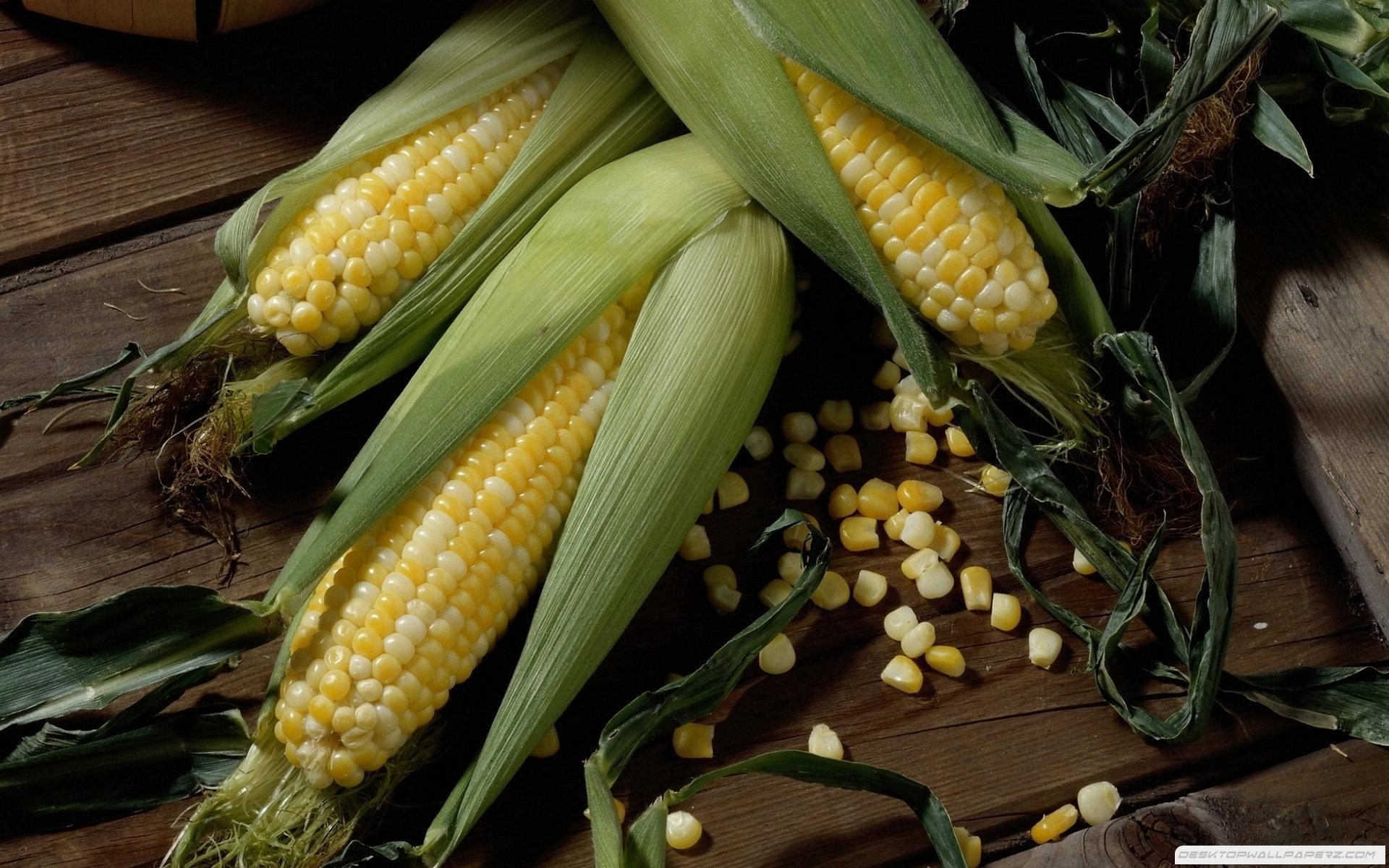 Corn 19201200 36496 HD Wallpaper Res 1920x1200 DesktopAScom 1920x1200