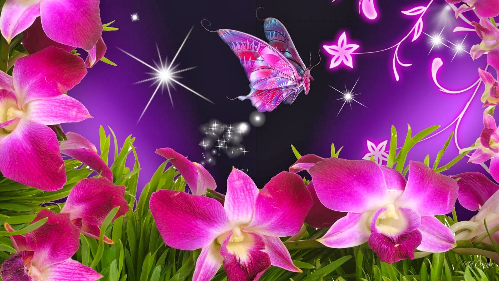 flowers colorful spring butterflies tulips purple yellow fresh ...