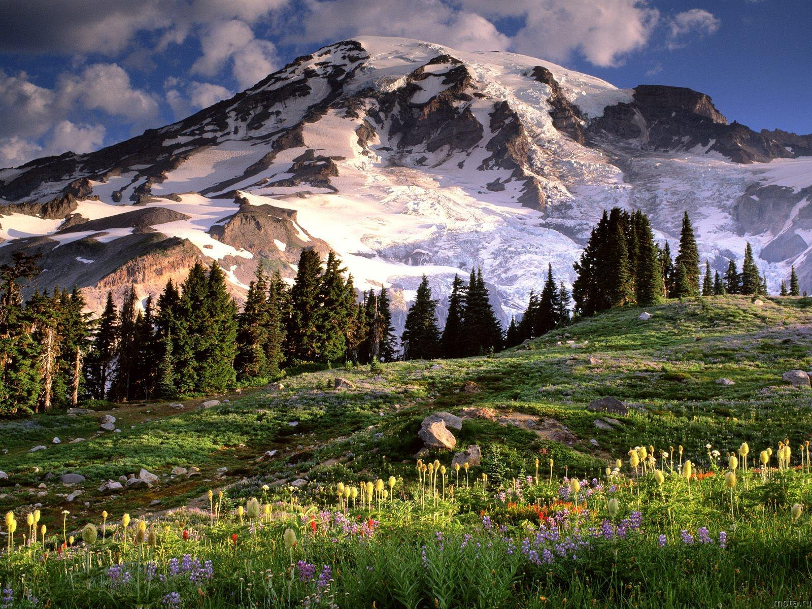 Download Wallpaper Blooming Wildflowers and Mount Rainier 1600x1200