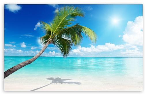 Palm Tree Beach HD wallpaper for Wide 1610 53 Widescreen WHXGA WQXGA 510x330