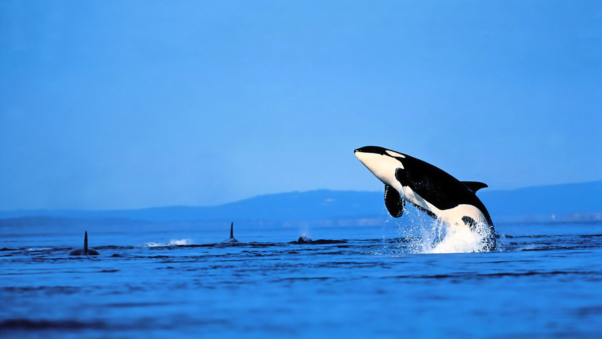 17 Orca HD Wallpapers Backgrounds 1920x1080