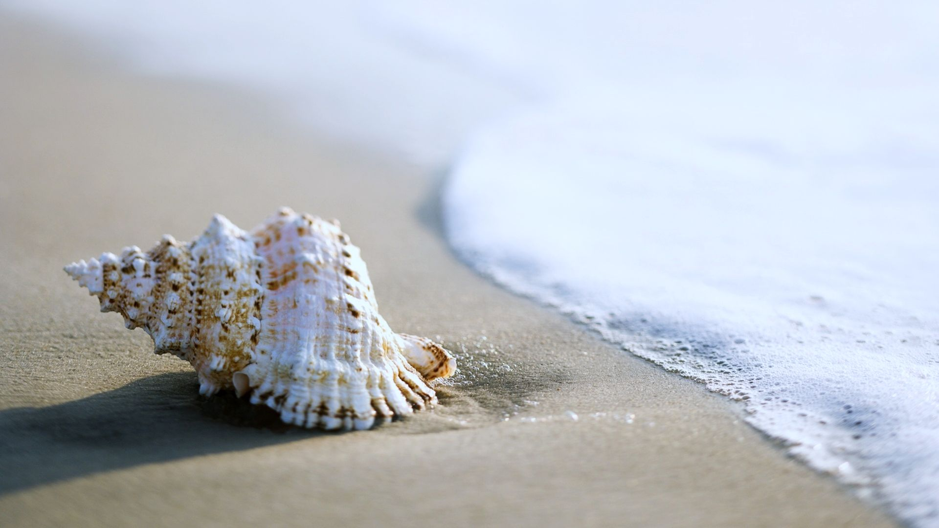 Sea Shell Wallpaper   Wallpaper Stream 1920x1080