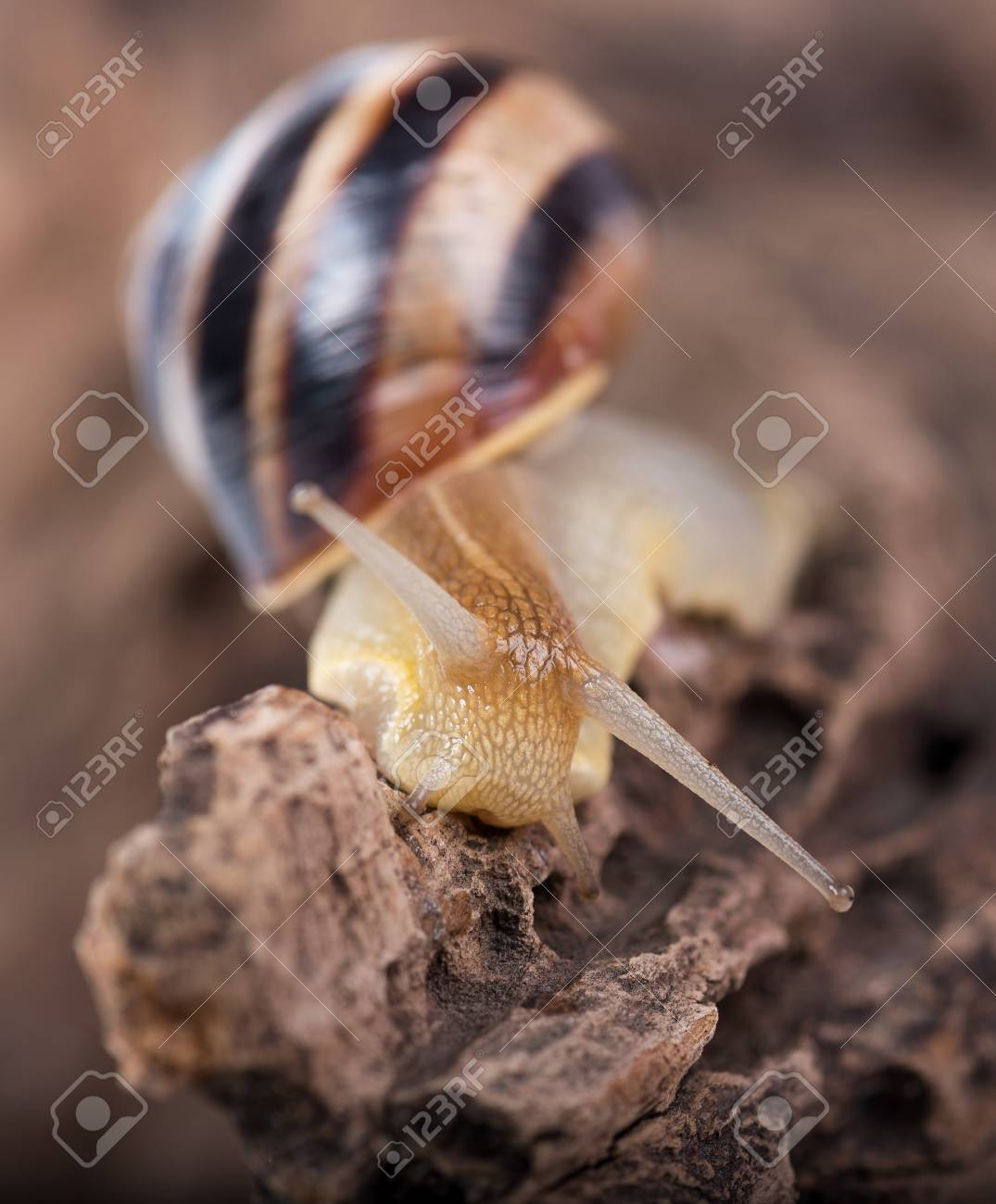 Bright Cute Snail Over The Old Stub Background Close up Stock 1075x1300