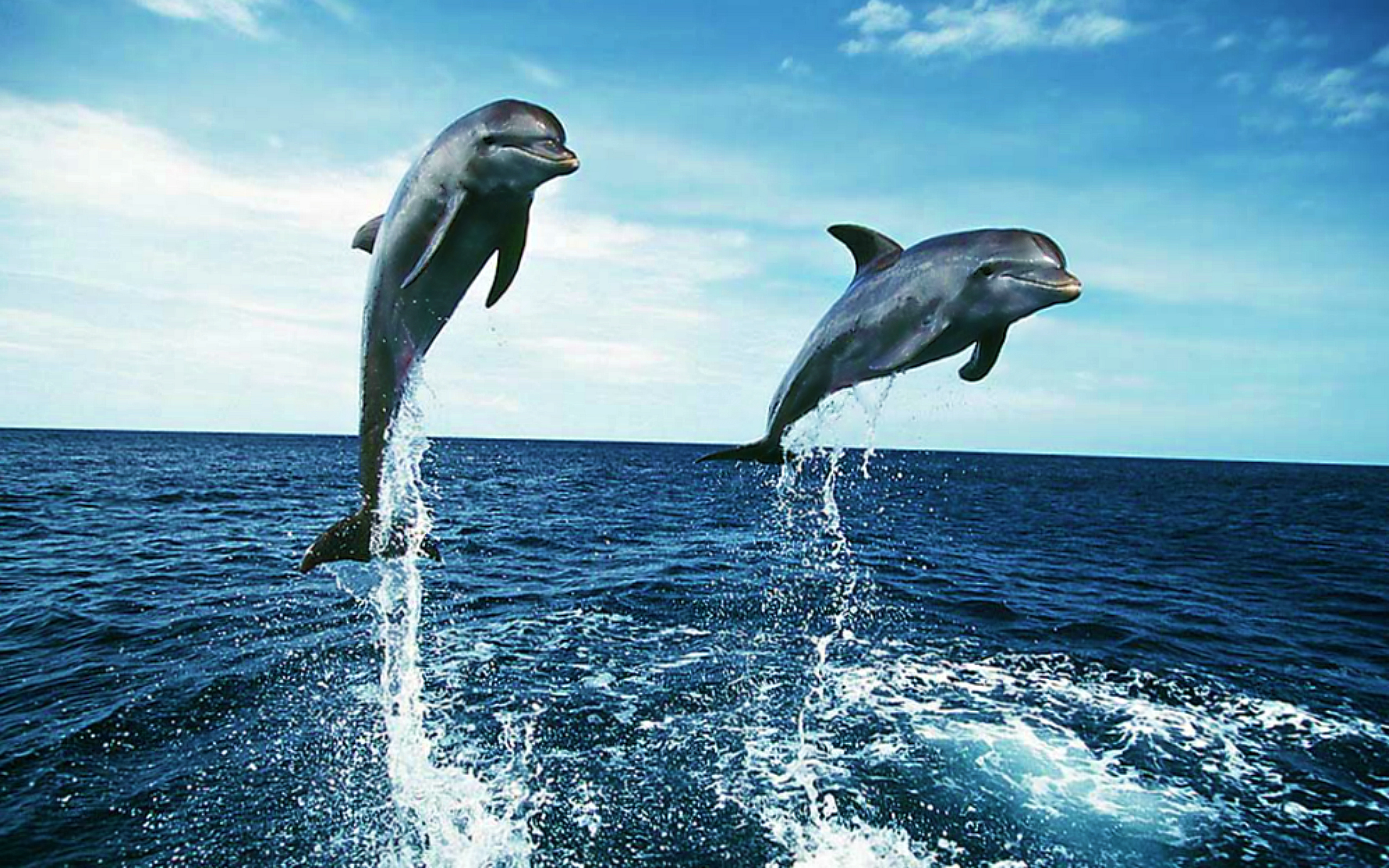 Dolphin Wallpapers HD 2560x1600