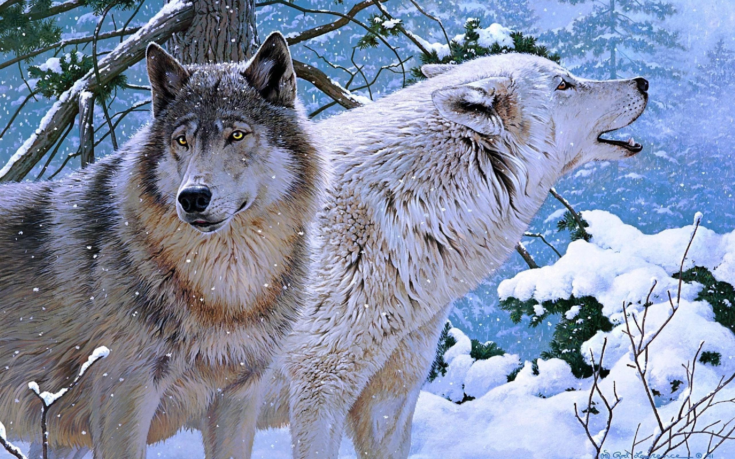 wolf   Wolves Wallpaper 32863756 2560x1600