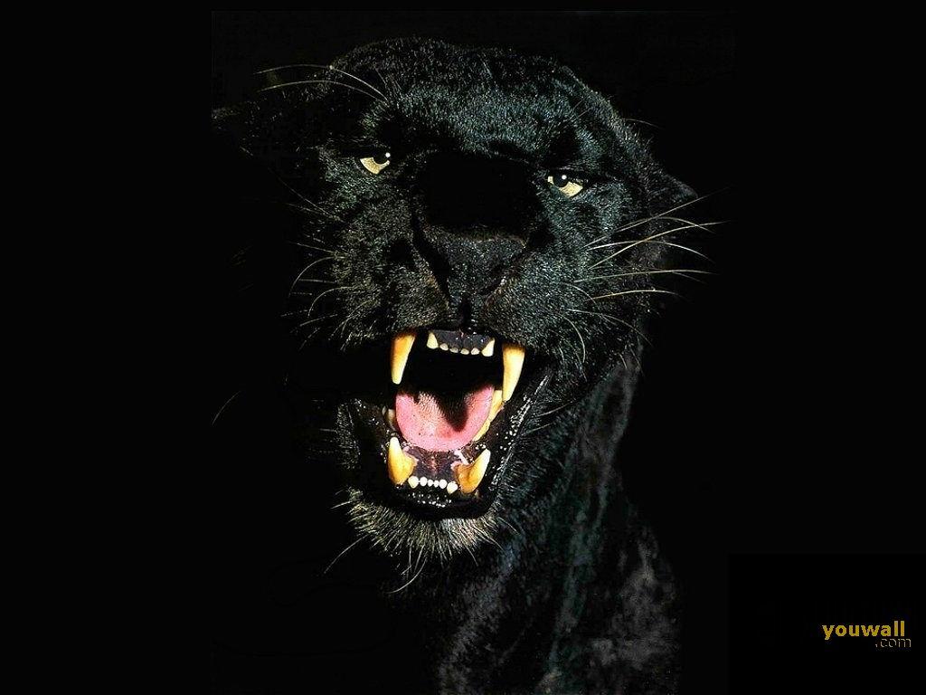 YouWall Black Panther Wallpaper wallpaperwallpapersfree 1024x768
