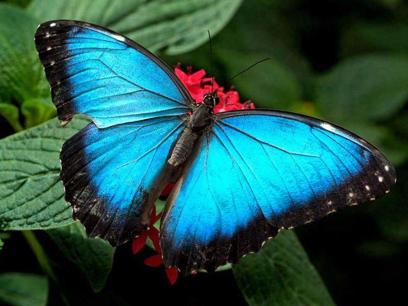 Butterfly Desktop Wallpapers Butterflies Desktop Wallpaper 800x600