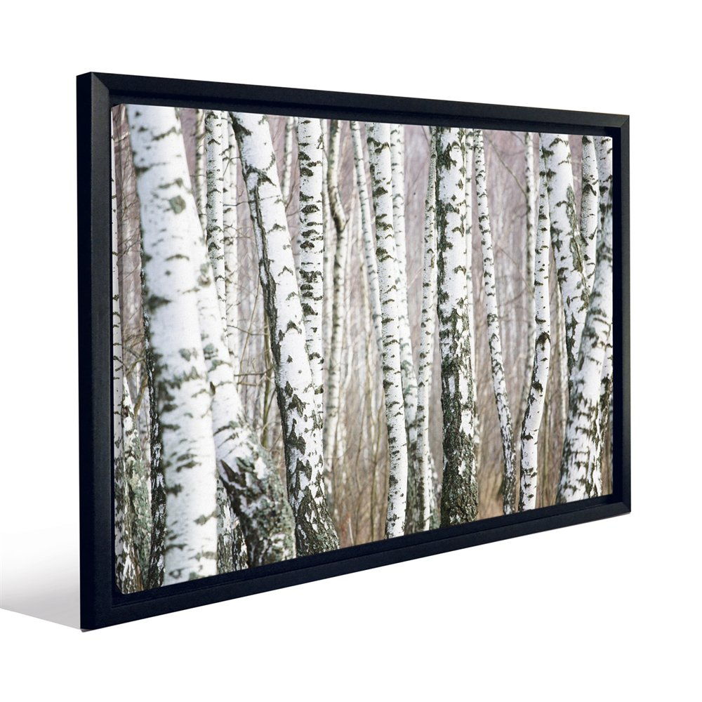 JP London FCNV2165 Birch Tree Forest Naturescape Black and White 1000x1000