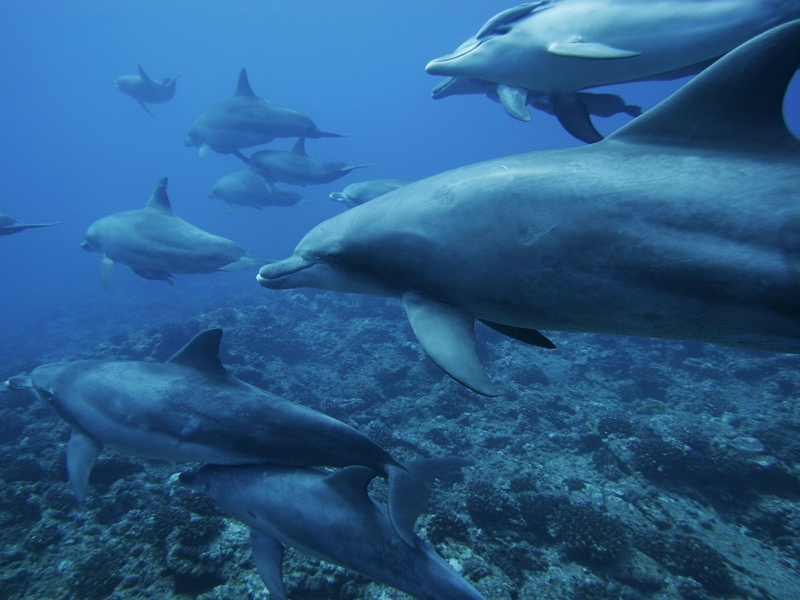 Category Animals Hd Wallpapers Subcategory Dolphins Hd Wallpapers 800x600