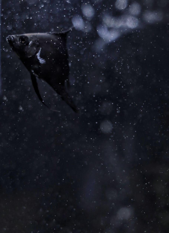 HD wallpaper black fish animal grey sea life outdoors 910x1251