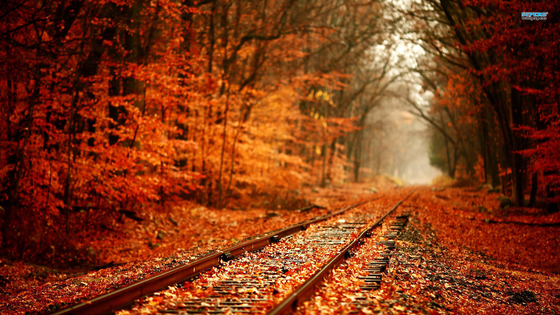 Road Autumn Wallpapers HD 1920x1080